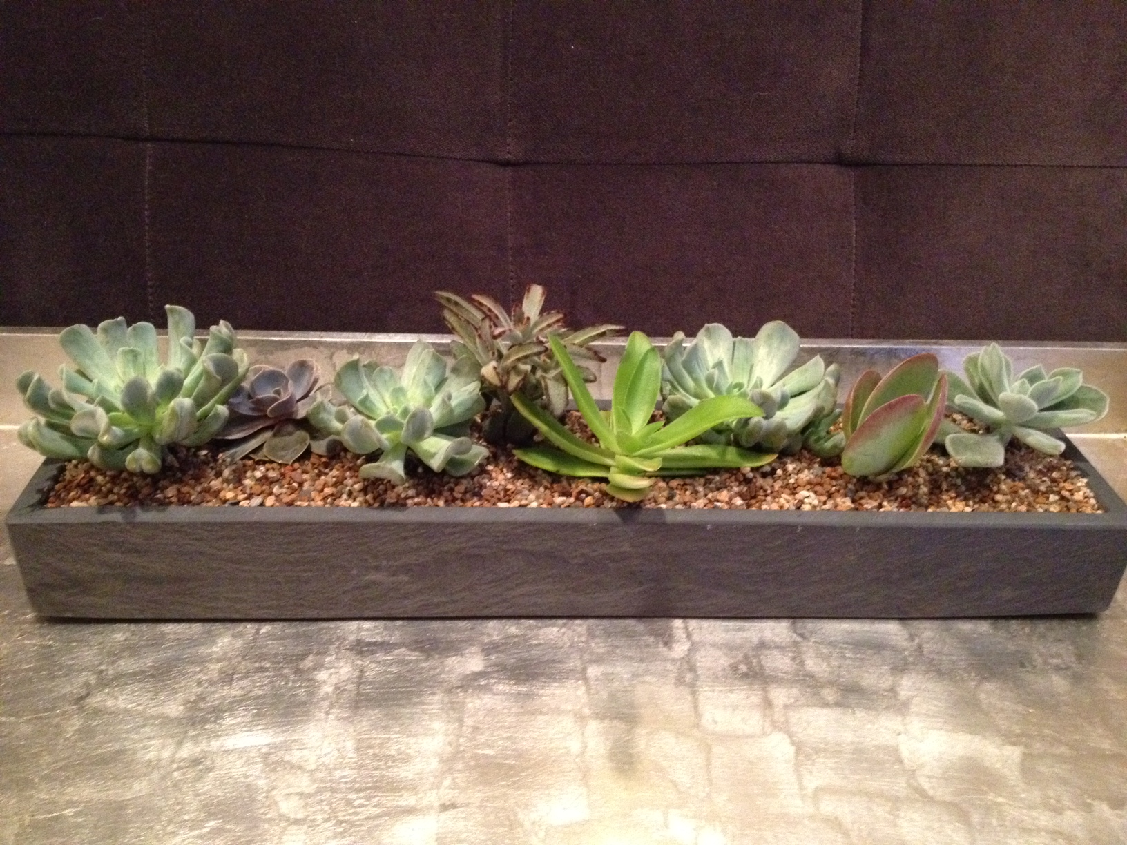 Indoor winter projects with succulents and tropicals wicker rooftop chicago - Best indoor succulents ...